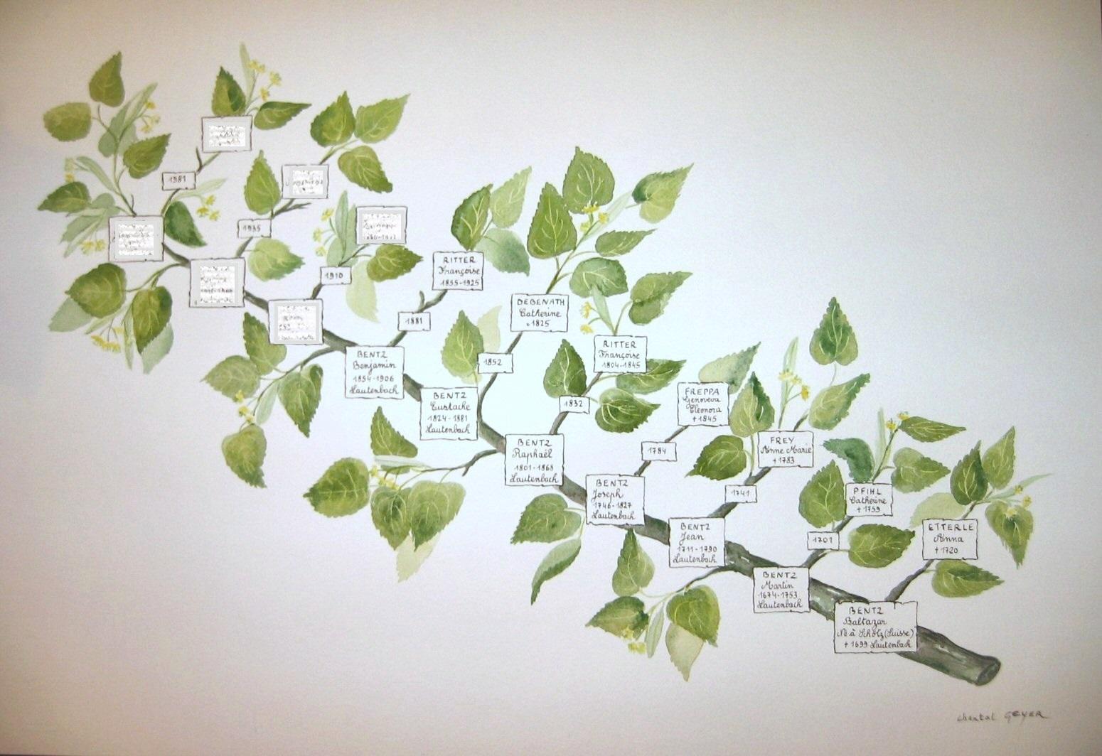 Branche de tilleul-patronymique